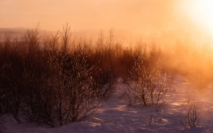 frosty, snow, winter, nature, cold, season, landscape, bushes, December