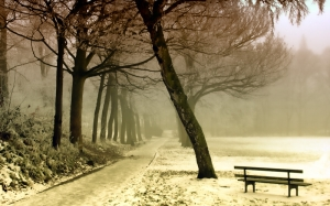 winter, landscape, snow, nature, frost, season, trees, december, park, fog