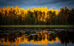 autumn, nature, forest, lake, landscape