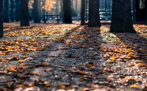 autumn, nature, park, foliage, benches