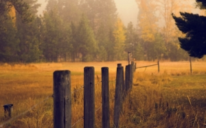 autumn, nature, field, meadow, forest, trees, grass, fence