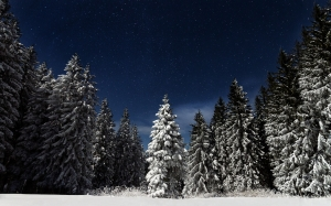 winter landscape, mountain, forest, winter, snow, nature, landscape