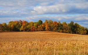 autumn, nature, landscape, field, forest, trees, sky, clouds