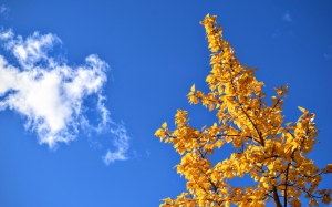 autumn, nature, sky, branches, leaves, yellow leaves, blue sky