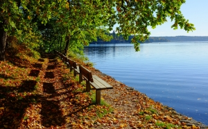 autumn, nature, landscape, trees, lake, bench, trail, road, path