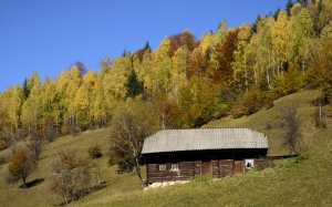 autumn, nature, landscape, forest, trees, hut