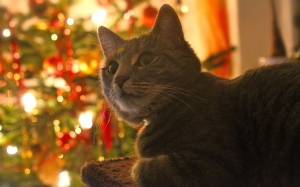 New year, Christmas, Xmas, holidays, food, cat, pet, tree