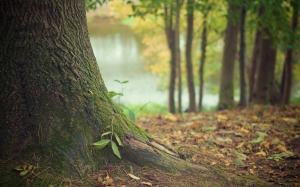 nature, forest, moss, leaves, tree, autumn, fall, tree trunk, stem