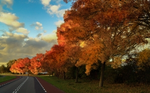 street, trees, autumn, road