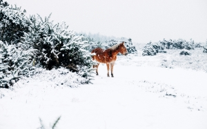 horse, winter, nature, animal, forest, landscape, shrubs, trees, snow
