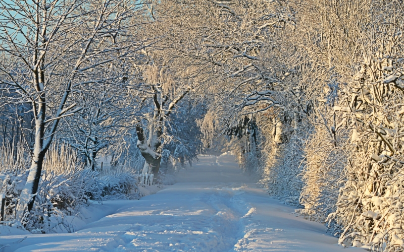 winter, wintry, snow, snow landscape, snowy, snow lane, snow meadow, trees, nature, landscape, christmas, forest