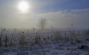 winter, nature, snow, frost, fog, field, tree, grass