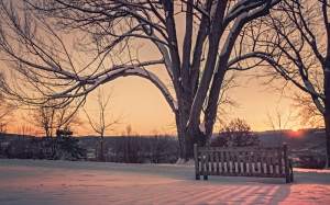 snow, dawn, sunset, winter, sunrise, twilight, branches, tree, dusk, bench