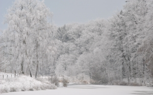 snow, winter, cold, wintry, tree, december, twilight, icy, landscape