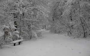 winter, snow, wintry, white, forest, nature, winter forest, landscape, bench