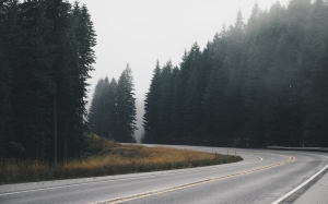 road, forest, nature, landscape, clouds, cloudy