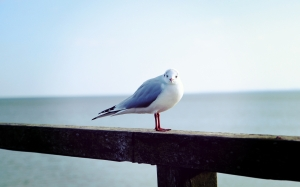 bird, beach, seagulls, animals, nature