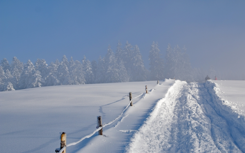 winter, snow, wintry, nature, snow landscape, trees, frost, fir forest, cold, white, icy, snowy, path