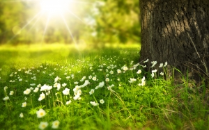 spring, tree, flowers, meadow, wood, forest, sun, summer, picnic, light, rays