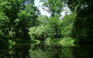 park, forest, trees, woods, lake, pond, reflections, summer, spring, nature