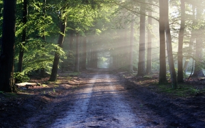 light, road, landscape, nature, sun, forest, trees, path, way, rays, pathway