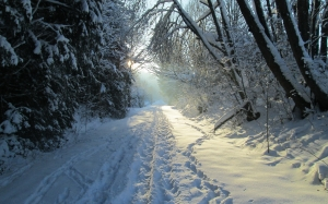 january, winter, snow, forest, woods, trees, path, nature