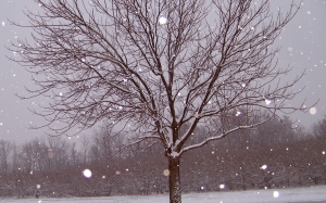 snow, tree, christmas, xmas, snowfall, december, ice, landscape, frozen, frosty, january, february, storm