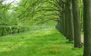 avenue, trees, spring, may, nature, green, trees