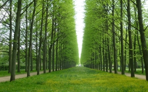 trees, avenue, green, spring, may, nature, grass
