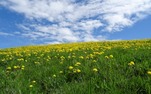 bavaria, clouds, spring, meadow, dandelion, may, grass