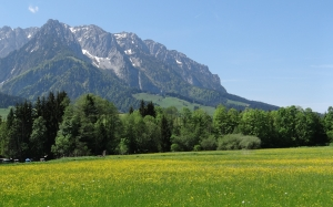 tyrol, mountains, spring, meadow, nature, landscape, grass