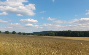 wheat field, spike, cereals, grain, agriculture, harvest, landscape, sky, midsummer, august, nature, cornfield