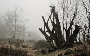 fog, tree root, autumn, nature, mystical, mood, atmosphere, gloomy, branches, silent, landscape, november, swampy, nature