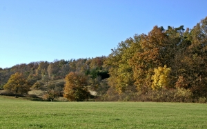 autumn landscape, forest, woods, november, trees, meadow, nature, fall leaves