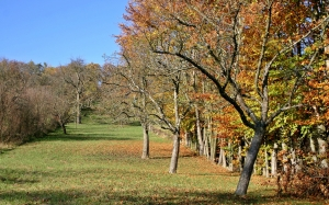 apple trees, autumn, nature, landscape, fall foliage, sunny, november