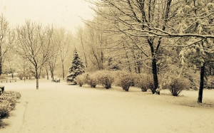 snow, winter, trees, nature, holiday, christmas, xmas, frost, snowy, december, park, sepia