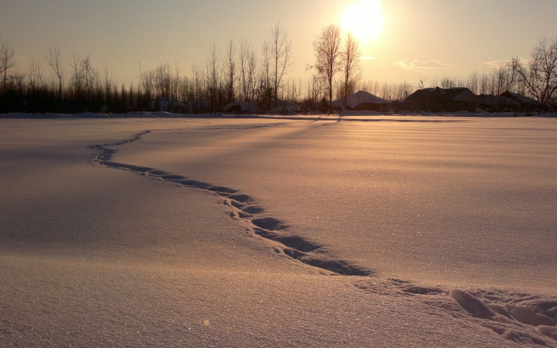 snow, winter, tracks, nature, cold, december, january, sunset, sunrise, frosty, trees, woods, christmas, xmas