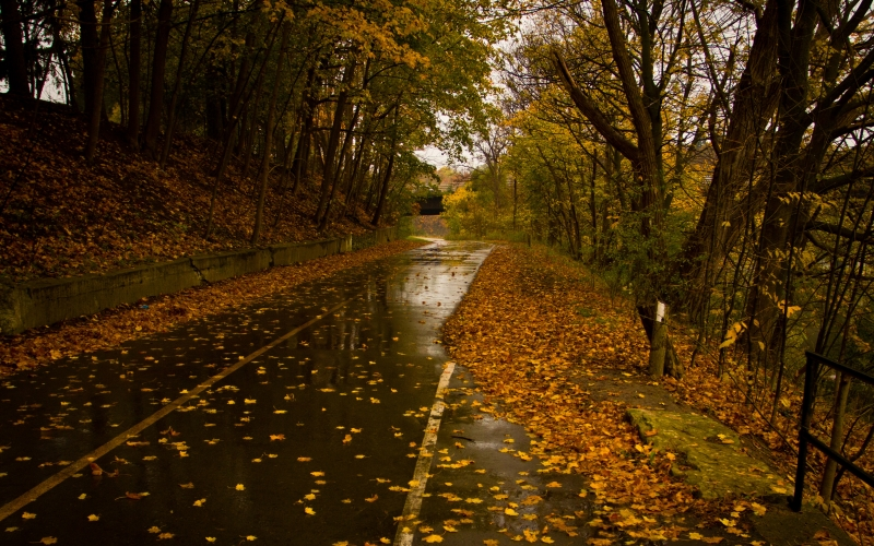 road, rain, leaves, autumn, fall, trees, nature