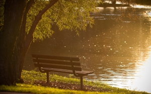 park, bench, river, water, summer, lake, trees, grass, nature, sun rays
