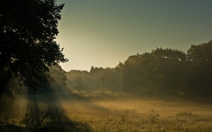 sunrise, sun rays, grass, field, trees, forest, woods, sky, nature, shadow, morning