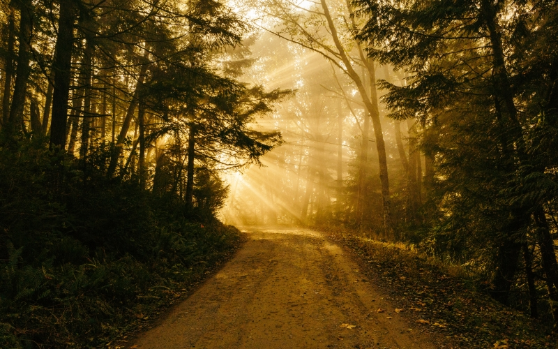 chuckanut mountain, autumn, fall, forest, light, morning, path, road, sunrise, trees, woods, woodland, nature