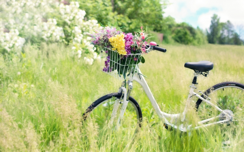 bicycle, meadow, flowers, grass, bike, spring, countryside, summer, nature