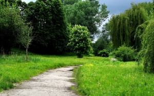 grass, trees, park, path, green, spring, nature