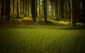 forest, nature, trees, grass, mystical, summer, woods