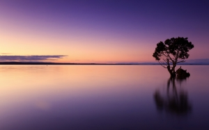 sunset, tree, water, nature, landscape, sky, dusk, horizon, evening, summer, sea, sundown