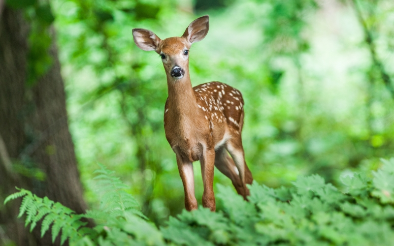 wildlife, young, mammal, animal, forest, grass, nature, deer