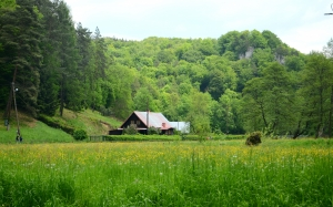 cottage, forest, meadow, poland, valley, shrubbery, green, trees, village, woods