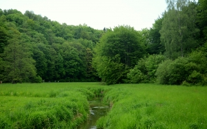 brook, river, forest, meadow, trees, poland, valley, may, woods, spring, green