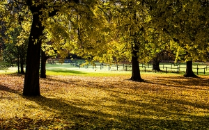 autumn, fall, foliage, trees, leaves, park