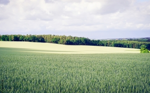 landscape, nature, clouds, field, trees, countryside, grass